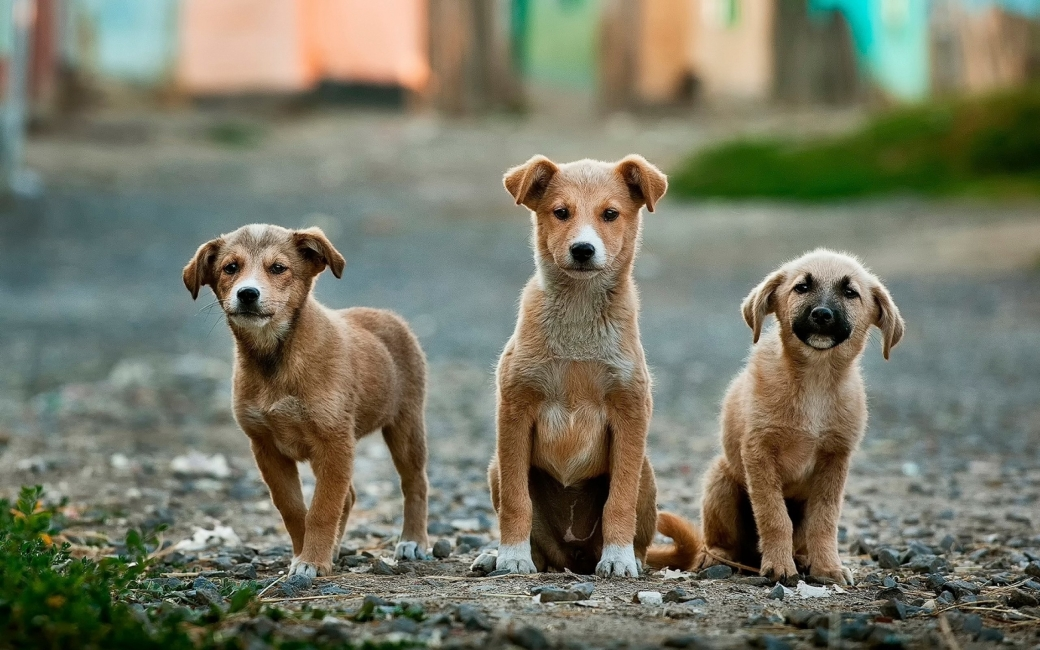 Canva - Three Puppies on the Road